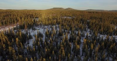 4K Aerial pan right then descend into Boreal forest in winter - NO Colour Correction
