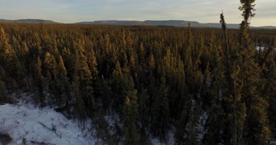 4k Aerial dolly left to right across Boreal forest in winter - NO Colour Correction