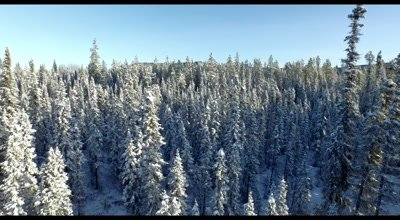 4K Aerial fly in to close up on snow covered tree in boreal forest