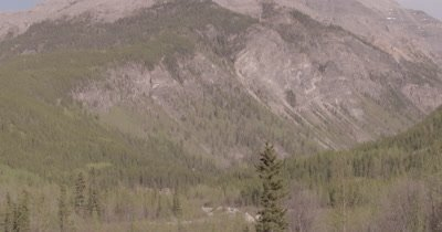 4K Moose eating willows tilt down from mountain, extreme Wide Shot - SLOG2 NO Colour Correction