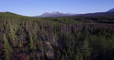 4K aerial over forest/trees valley below and snow peak mountains in distance - No Colour Correctionr