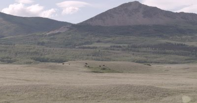 4K Wood Bison walking over grassy hills mountains and clouds behind, Extreme wide shot - NOT Colour Corrected