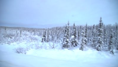 4K Boreal Forest snow covered, travelling, Hand Held, Northern Canada - NOT Colour Corrected
