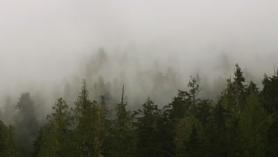 HD Mist rising from forest Time Lapse - NOT Colour Corrected