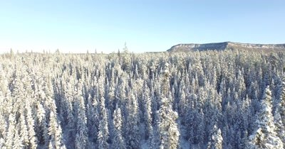 4K Aerial fly back over snow covered boreal forest to reveal mountain behind