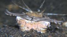Close Up Of Bobbit Worms Jaws As It Sinks Into The Sand