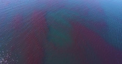 Aerial over Krill swarm
