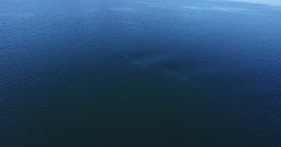 Aerial of two fin whales blowing mist simultaneously
