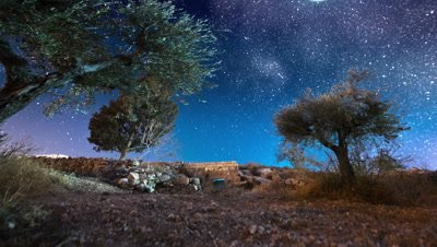 Astro time-lapse with olive trees in Bethlehem, Israel
