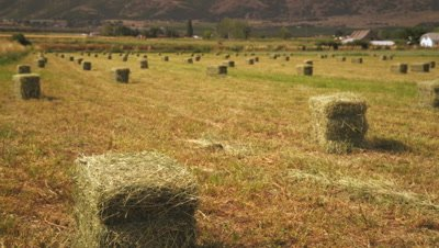 Static shot of rows of bails of hay.