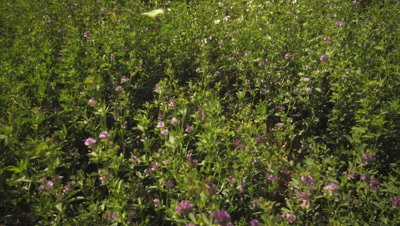 Static shot of butterfly and purple flower bushes.