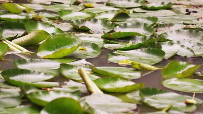 Close up of leaves resting on still pool
