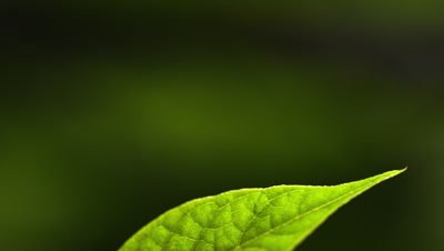 Racking focus extreme close up of leaf and stem