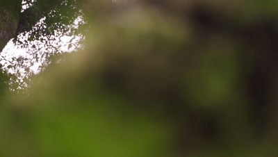 Racking focus footage of bushes in a forest