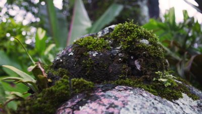 Tracking footage of moss-covered rocks and forest floor