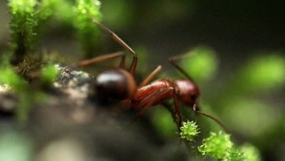 A lone ant on a moss-covered rock