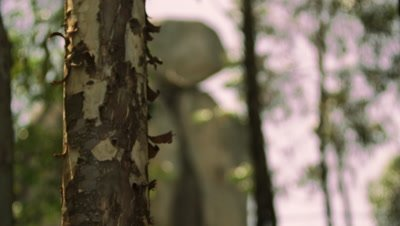 Racking focus footage of tree and stone stack
