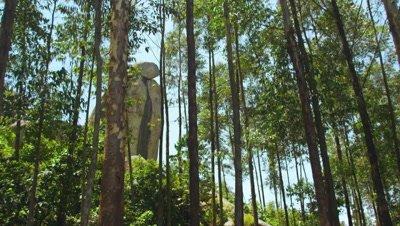 Hillside trees, tall stone