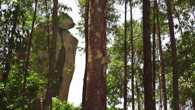 Medium shot of hillside trees, tall stone