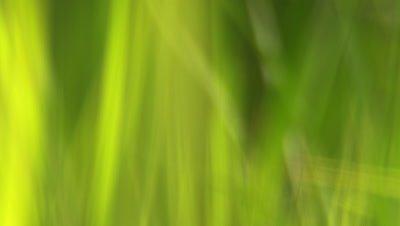 Racking focus close up of grass