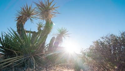 Timelapse shot of the sunset of cacti at the Nevada desert with lens flare