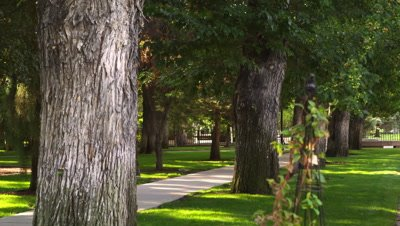 Static shot of row of trees bordering pathway.