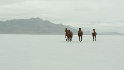 Horses running across salt flats.