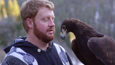 Falconer putting blinding hood on golden eagle.