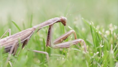 Praying mantis crawling out of frame.