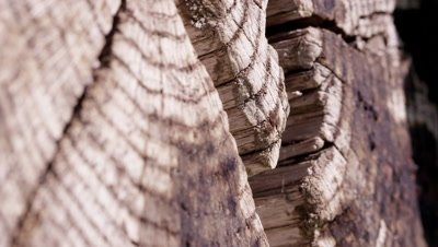 Macro shot of the end of an old log tilting up.