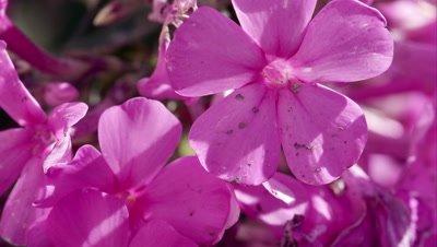 Macro shot of purple flowers.