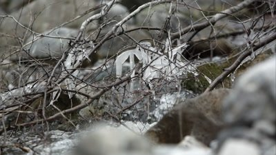 Zoomed view of icicles hanging on branches above a small creek.