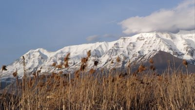 Panning view of snow capped mountains behind field of tamarisk grass.