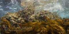 Waves Crash On Rock With Kelp Swaying - Sun Glinting At Surface