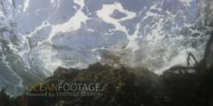 Violent Waves Crash On Rock With Kelp Swaying - Sun Glinting At Surface