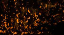 Fluorescence Amphipods