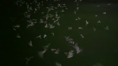 Mayflies flying in slow motion over the river, filming from boat