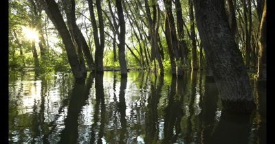 Danube floodplain forest during floods