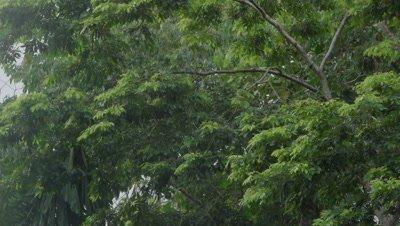 Peruvian rainforest