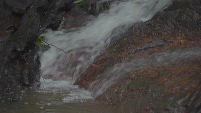Caiman in the Peruvian rainforest