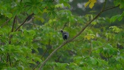 Birds in the Peruvian rainforest