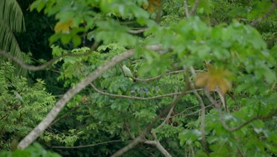 green-and-yellow macaws on tree