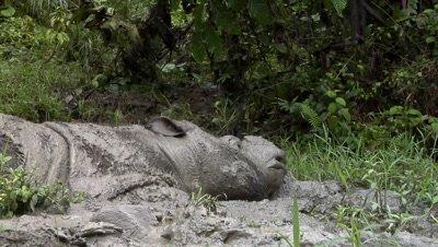 Tamtam in the mud bath