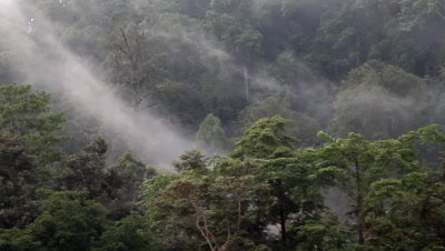 Beautiful Bornean rainforest filming from boat