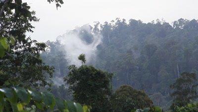 Cloud over the Bornean Rainforest, Malaysia