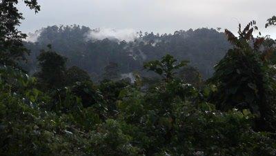 Cloud over the Bornean Rainforest, Landscape view