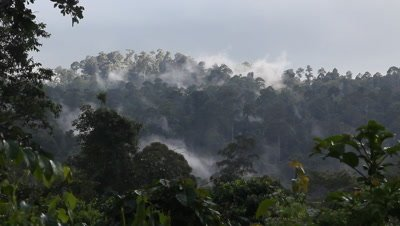 Cloud over the Bornean Rainforest