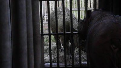Sabah Rhino Conservation Project