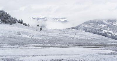 cold snowy day where newborn bison falls into pond