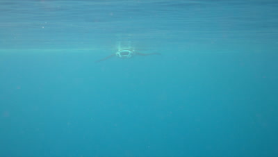 Manta ray swims in blue water